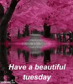 Happy Tuesday Quotes on Pinterest