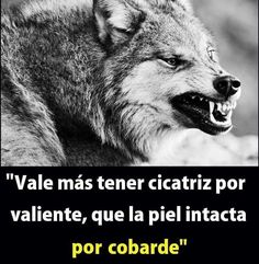 Der Steppenwolf, Spanish Inspirational Quotes, Wolf Life, Quotes En Espanol, Wolf Quotes, Fake Friends, Thinking Quotes, Motivational Phrases, Lone Wolf