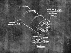 Neumología: Enfermedad pulmonar obstructiva