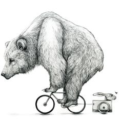 Bear Biking Print - saddleandspoke.co.uk - Style on two wheels