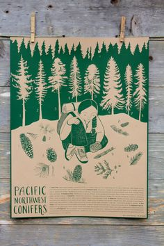 Pacific Northwest Conifer Identification Poster Print - 16 x 21 Screenprint in Clay - Forest Wall Art - Tree ID - Classroom Poster