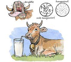 Wieso ist Milch weiß?
