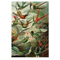 Shop Hummingbird, Trochilidae Kolibris by Ernst Haeckel Wood Wall Art created by CreativeArtSupply. Personalize it with photos & text or purchase as is! Ernst Haeckel, Wood Wall Art, Canvas Wall Art, Canvas Prints, Oliver Gal, Graphic Design Print, Graphic Art, Victoria And Albert Museum, Painting Frames