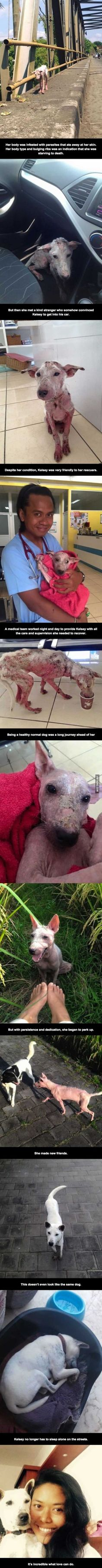 Who would do such a thing to such and kind caring dog?!!! Even after everything shes been through she still is kind to humans who were possibly the reason how she end up that way. EARTH IS FOR ALL LIFE NOT JUST HUMAN LIFE!!!!!!