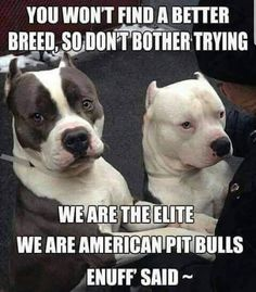 Uplifting So You Want A American Pit Bull Terrier Ideas. Fabulous So You Want A American Pit Bull Terrier Ideas. Cute Pitbulls, Nanny Dog, American Pitbull, American Bullies, Pit Bull Love, Pitbull Terrier, Bull Terriers, Terrier Mix, Terrier Dogs