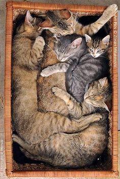 Katzen,Cats by SchlangenTieger on Flickr