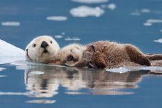 Photo by Roman Golubenko, North Bergen, NJ, USA Photographed at Alaska, USA