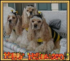 Happy Halloween Cocker Spaniel girls
