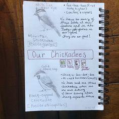 chickadee nature journal page Journal Pages, Journals, Study Board, Nature Study, Nature Journal, Homeschool, Bullet Journal, Random Stuff, Blog