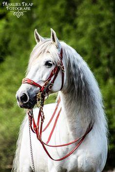 White horse                                                       …