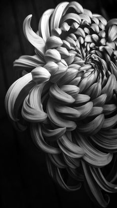 Trendy Flowers Photography Black And White Hair Black And White Flowers, Black White Photos, White Art, Black And White Photography, Floral Photography, Macro Photography, Urban Photography, Crisantemo Tattoo, Arte Black