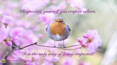 Shop Cute Spring Robin Bird Easter Greetings Blossoms Postcard created by ColorFlowCreations. Personalize it with photos & text or purchase as is! Pictures Images, Free Pictures, Bird Pictures, Robin Vogel, Merle, Flora Und Fauna, Bird Free, Spring Birds, Robin Bird