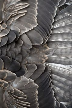 Taupe Feather Textures - natural surface pattern & texture inspiration for bird inspired design TÜY Pattern Texture, Surface Pattern, Texture Design, Surface Design, Natural Forms, Natural Texture, Au Natural, Patterns In Nature, Textures Patterns