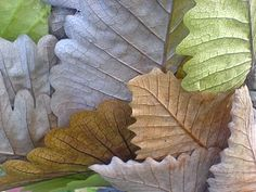 nature. capturing the beauty of leaves perfectly!