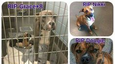 Stop the Mass Euthanasia at the Franklin County Ohio Dog Shelter.