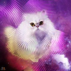 Working on @vino_the_persian pet portrait commission!  A big ole floof!  @vino_the_persian  @vino_the_persian  #exoticshorthair #cat #cute #flatface #kitten #meow #pet #mreggs #catlover #exoticsofinstagram #smushface #weeklyfluff