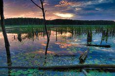 Mühlensee, Nationalpark Müritz, Mecklenburg-Vorpommern, Germany by Andrew Leopold