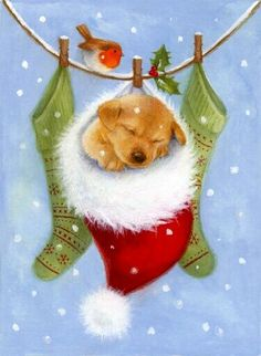 Christmas puppy. Beautiful #christmas screen savers at www.fabuloussavers.com/christmasscreensavers3.shtml Thank you for viewing!