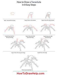 how-to-draw-a-tarantula-step-by-step