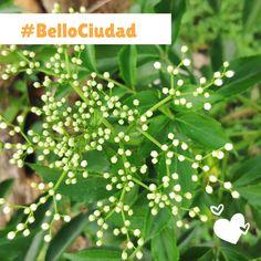 BelloCiudad #NestorLeon Parsley, Bellisima, Herbs, Food, Cities, Essen, Herb, Meals, Yemek
