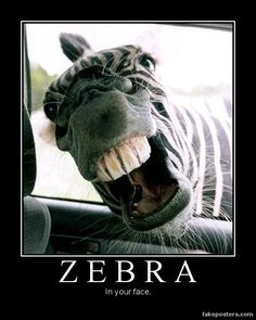 Zebra - Demotivational Poster
