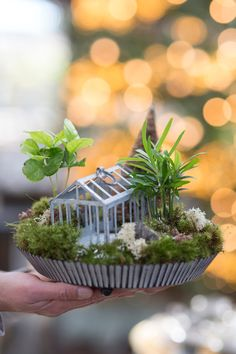 Gifts From The Greenhouse: Terrain's Miniature Landscapes | a BLOG