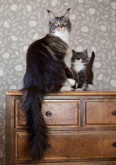 Oh! <3 family portrait
