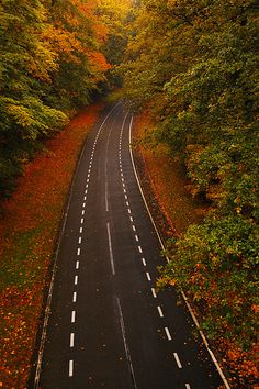 Autumn Road, Arnhem, The Netherlands