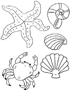 Beach Shell Coloring Pages Printable