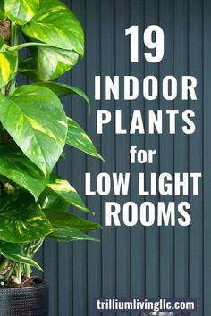 Indoor Plants For Low-Light Rooms - Trillium Living