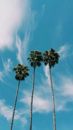 Summer Wallpaper Phone Backgrounds Palm Trees 25 Ideas For 2019 Beach Aesthetic, Summer Aesthetic, Blue Aesthetic, Water Aesthetic, Summer Wallpaper, Tree Wallpaper, Beach Wallpaper, Wallpaper Ideas, Photo Wall Collage