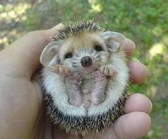 MEH!!! i want one!!