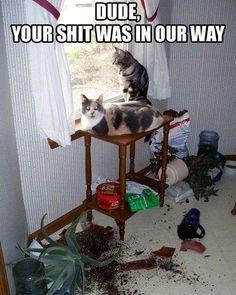 Oh My Freaking Stars!: Cats & Windows