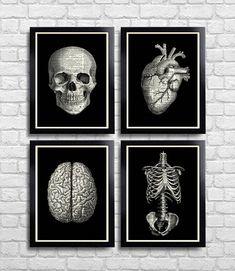 Anatomical Set Anatomy Print Set of 4 Medical Wall Art
