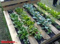 This site has tons of uses for pallets. Love it