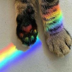 Rainbow cat and other cats Animals And Pets, Baby Animals, Funny Animals, Cute Animals, Animal Babies, Wild Animals, I Love Cats, Crazy Cats, Rainbow Aesthetic