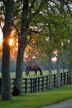 Beautiful pasture