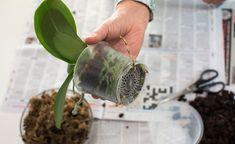 Garden Plants, Indoor Plants, House Plants, Good To Know, Flower Power, Orchids, Planter Pots, Flora, Herbs