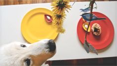 easter food for cats and dogs #dogeaster #easterparty #dogparty #easter garland #kikipelosi