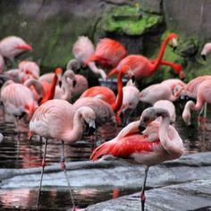 #flamingo #familie #bunt #farbig #zoo