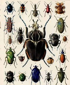 Antique Print Beetles Colorful Insects by AntiquePrintsAndMaps, $11.00