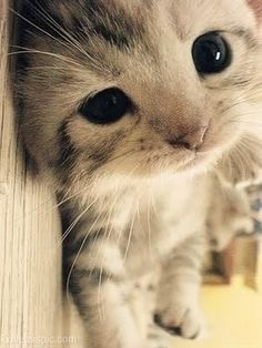 Kitty Closeup funny cute animals cat pet silly kitten Everyone who love pet/animal cute,just flowing me or invited me to board!!!!!