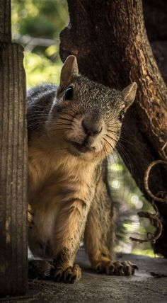 I think I just seen the Holiday Fried Pecans being delivered to my favorite store. Curious country squirrel ♥