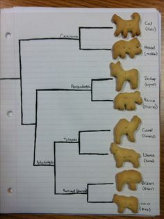 Animal Cracker Phylogeny [TEKS 7.11A] - Engagement Activity
