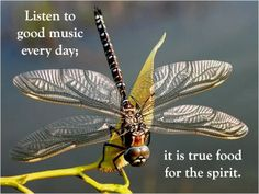 Silver-winged dragonfly, patterns on wings Beautiful Bugs, Beautiful Butterflies, Mantis Religiosa, Mosquito Larvae, Gossamer Wings, Insect Photography, Dragonfly Art, Dragonfly Symbolism, Dragonfly Quotes
