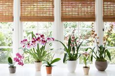 With our tips, growing orchids indoors is easy. Here are six of our favorite orchids for beginners, from Phalaenopsis to Oncidiums to Lady's Slippers.