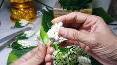 กระทงดอกไม้กลีบผกาซ้อนดอกข่าพุดตอน 7  วิธีมัดดอกข่าดอกพุดเพื่อบรรจุในกระทง - YouTube How To Make Garland, Diy Garland, Garland Making, Flower Garlands, Flower Decorations, Wedding Decorations, Real Flowers, Diy Flowers, Gift Wraping