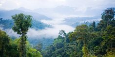 Zip-line through the treetops of the Amazon rain forest, float down a river on a log raft and explore the cobbled streets of Quito on this seven-night Ecuador and Amazon adventure for $1199 per person, including airfare and a luxe hotel stay. This guided excursion from Gate 1 travel knocks $3550 off competing packages ...