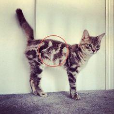Gato con retrato de gato! Que raro
