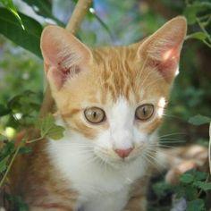 Fotografia The Love Cats